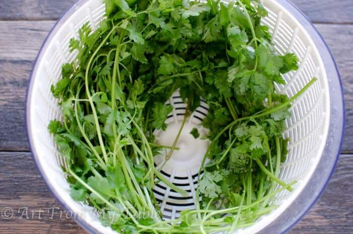 keeping cilantro fresh